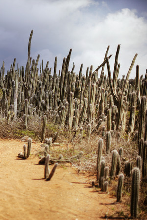 cactus forest on a tropical island Stock Photo