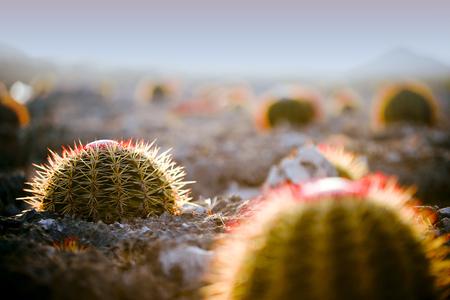 Cactus on Bonaire