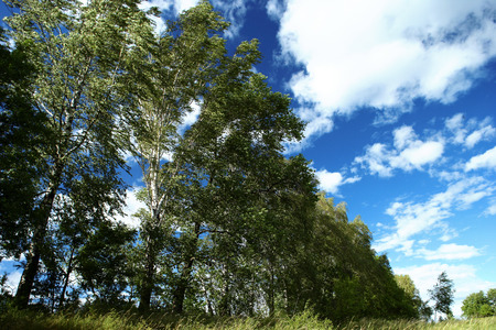 Landscape of tress and bright blue skies
