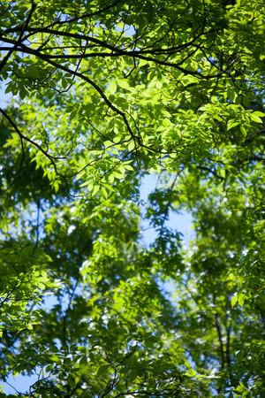 Brightly lit leaf background Фото со стока