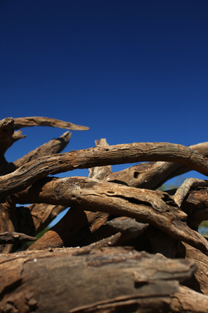 Old dried up driftwood on the shore. 版權商用圖片