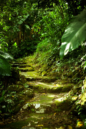 Stone stairs in the jungle.