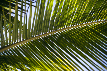 Palm leaf against the sky