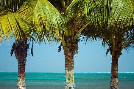 Three Palm Trees with their trunks painted.