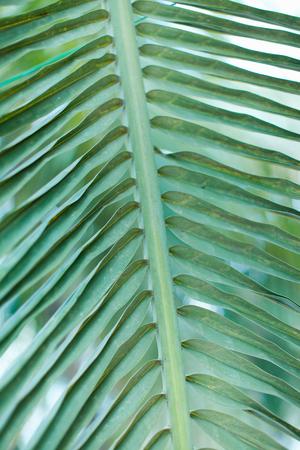 Faded Palm Tree leaf.