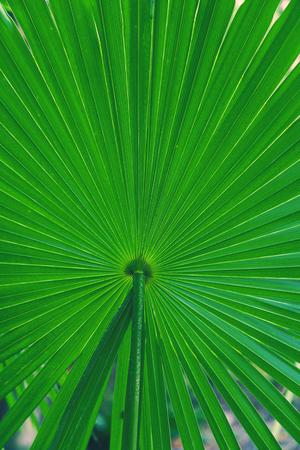 Detail of Palm leaf.
