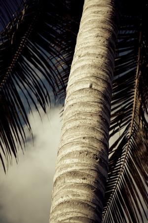 Detail of palm tree Фото со стока
