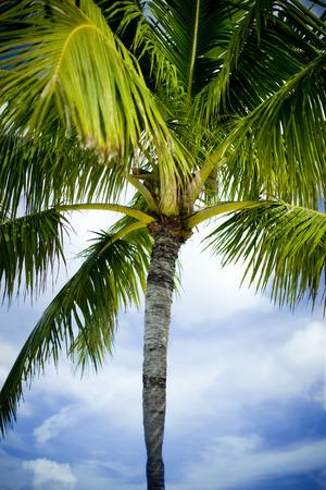 Tall Palm Tree Фото со стока