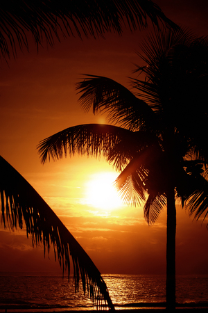Silhouette of palm trees at sunset Фото со стока