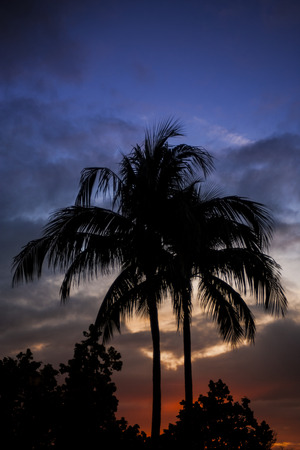 Back lit tropical scene with palm trees and dramatic sunset sky.