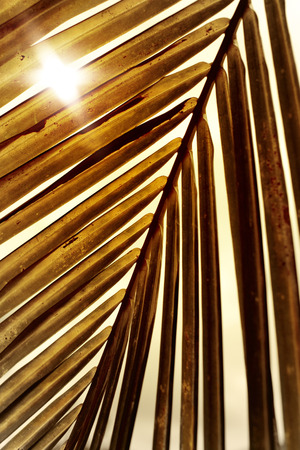 detail of a palm tree.