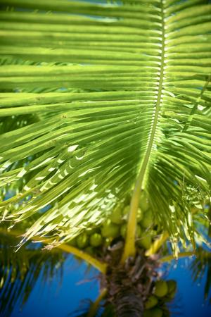 detail of a palm tree Фото со стока