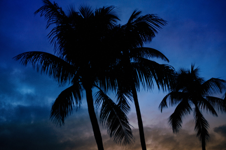 Palm tree silhouette. Grainy sky.