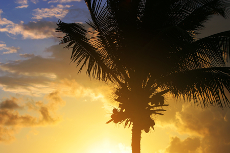 Silhouette of a palm tree at sunset.