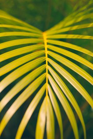 Detail of palm leaf Фото со стока