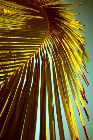 Detail of Palm tree. Фото со стока