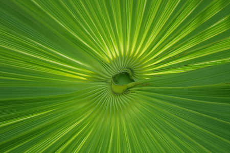 Detail of a palm plant