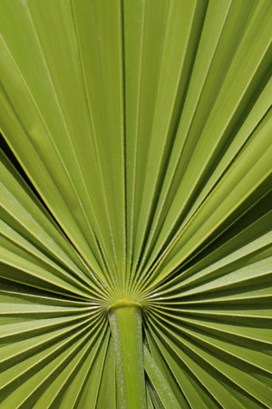 Close-up of palm frond