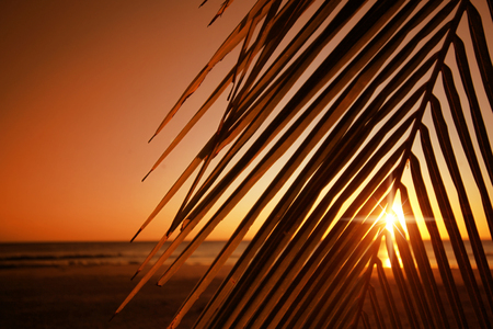 Palm tree leaf with sunset behind it. Фото со стока