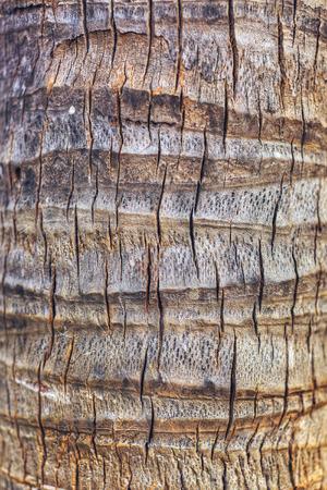 Detail of Palm Tree bark.
