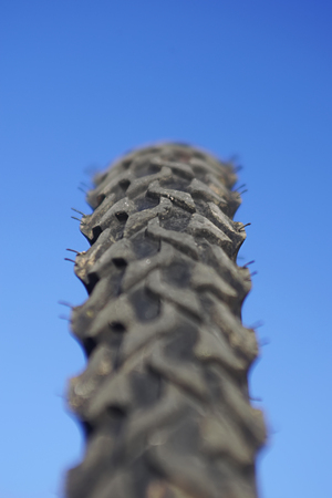 Close up of a mountain bike tire.