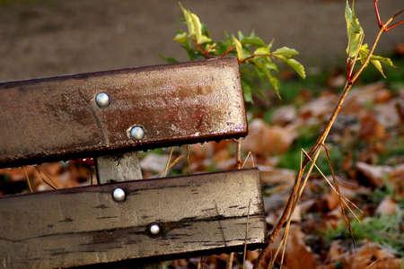 park bench: A park bench