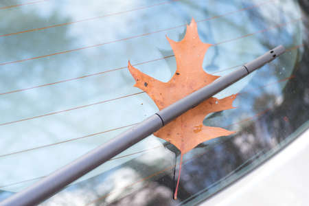 Autumn and a fallen leaf on the disc of a car Stock Photo