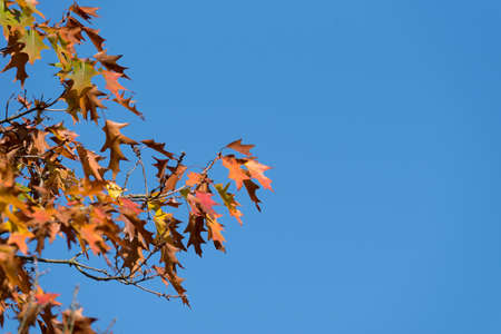 A tree and leaves in autumn Stock Photo