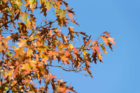 A tree with yellowish leaves in autumn Stock Photo