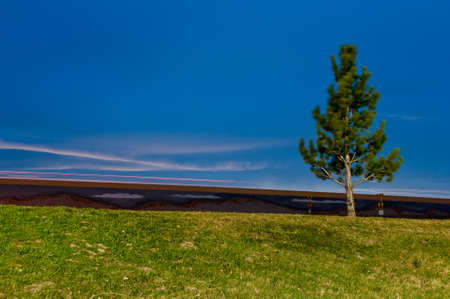 lawn grass: Small Tree blowing in the wind at night by the interstate
