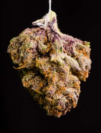 dispensary: Medical Marijuana shot in Denver, strain is Twisted Purple OG