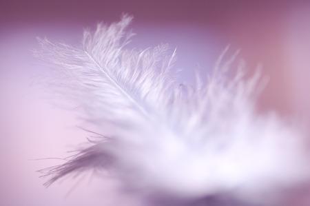 tender passion: Soft dream Stock Photo