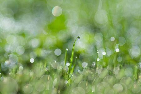 morning dew: Morning dew Stock Photo