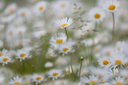 dreamy: Dreamy meadow