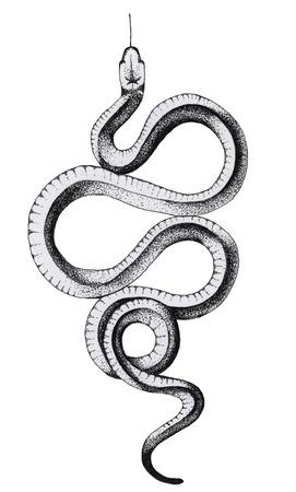 Ink crooked snake