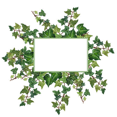 Watercolor botanical ivy illustration. Floral frame from ivy twig. Hand painted wreath green ivy leaves,wedding invitation, greeting card.