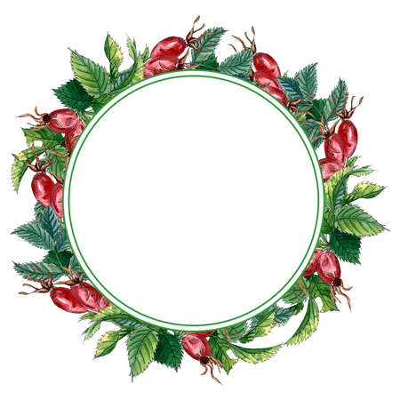 Wreath with green leaves and dog-rose fruits, hand drawn watercolor frame isolated on white. Round wreath with branch of Dog rose, red berries and green leaves.