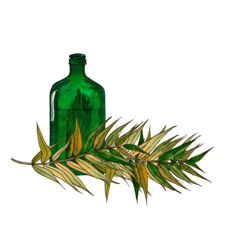 An olive branch with bottle. Green twig with leaves. Isolated object on a white background. Watercolor illustration.