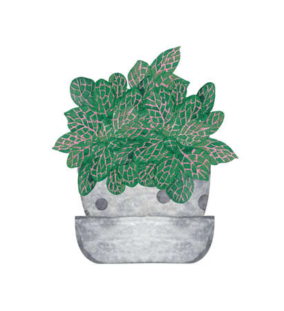 Nerve Plant, houseplant in the pot, isolated on white background. Watercolor potted plant illustration. Home decor