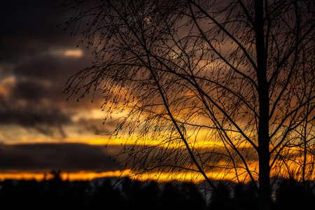 the sun seen through the Birch tree