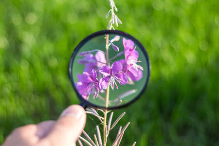beautiful violet flower through magnifying glass in sunny day
