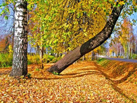 tree in yellow autumn park photo