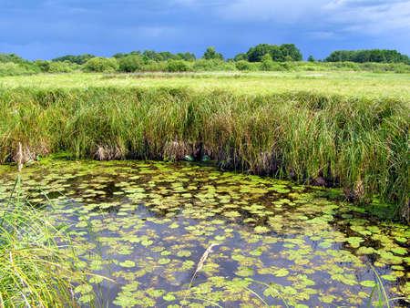 small lake on field Stock Photo - 5962728