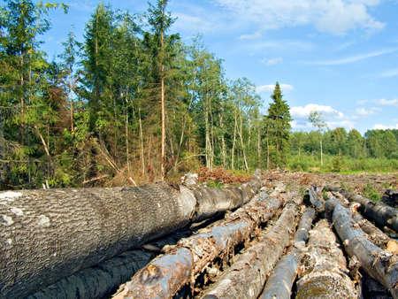 chopping wood Stock Photo - 5962720