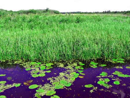 small lake on field photo