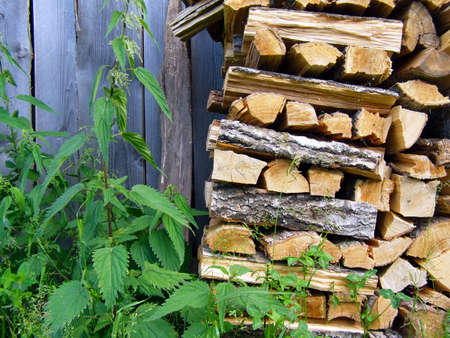 roughing: stack of logs in herb Stock Photo