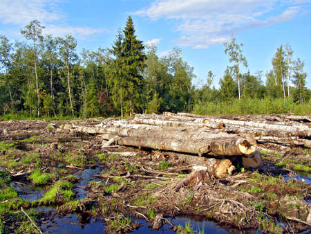 chopping wood Stock Photo - 5974930