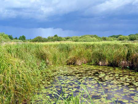 small lake on field Stock Photo - 6001980
