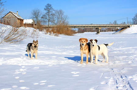 sound bite: stray dogs on ice river