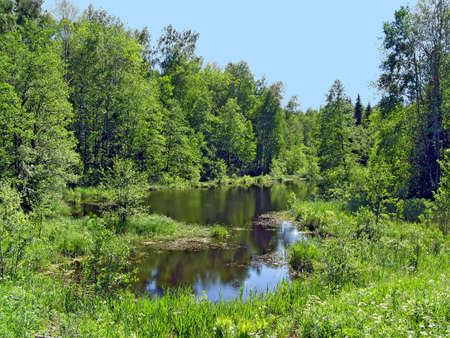 small lake in wood     photo